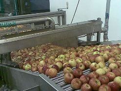 apple packing